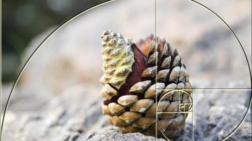 fibonacci-spirale-Andreas-Beutel-goldener-schnitt