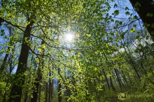 1-spring-in-the-forest
