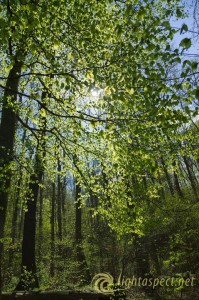 2-spring-forest