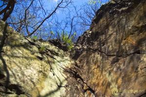 4-spring-awakening-rocks-forest