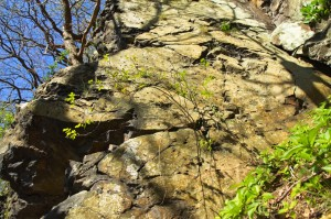 5-spring-awakening-rocks-plant-forest