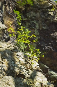 6-spring-awakening-rocks-plant2-forest