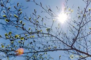 9-spring-awakening